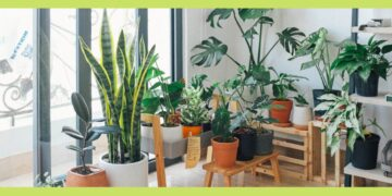 ideas for indoor plant decoration